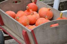 orange hokkaido pumpkins in a wagon