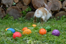 bunny leaving the Easter eggs