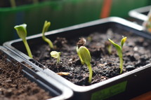A new beginning: New seed starts to grow. 