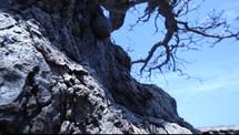 bark of a twisted tree