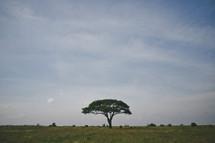 solo tree in a Nairobi savanna