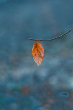 single leaf on a branch