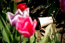trash and litter amongst the beauty of tulips