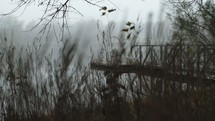 dock over a lake
