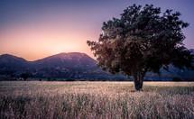 lone tree in a field in a valley