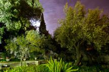 Garden of gethsemane, Israel