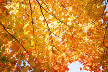 red, orange, and yellow fall leaves on a tree