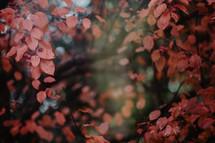fall leaves form border around blurred background