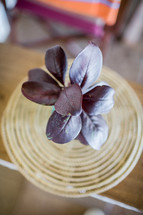 overhead view of purple leaves in a vase