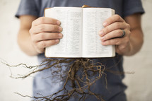 roots of a plant coming out of a Bible against a white background