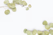 dried leaves on white background
