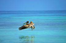 A pelican flying low over the ocean