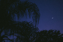 palm trees and a crescent moon