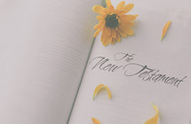 yellow flower on a Bible, the New Testament