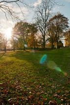Fall park trees
