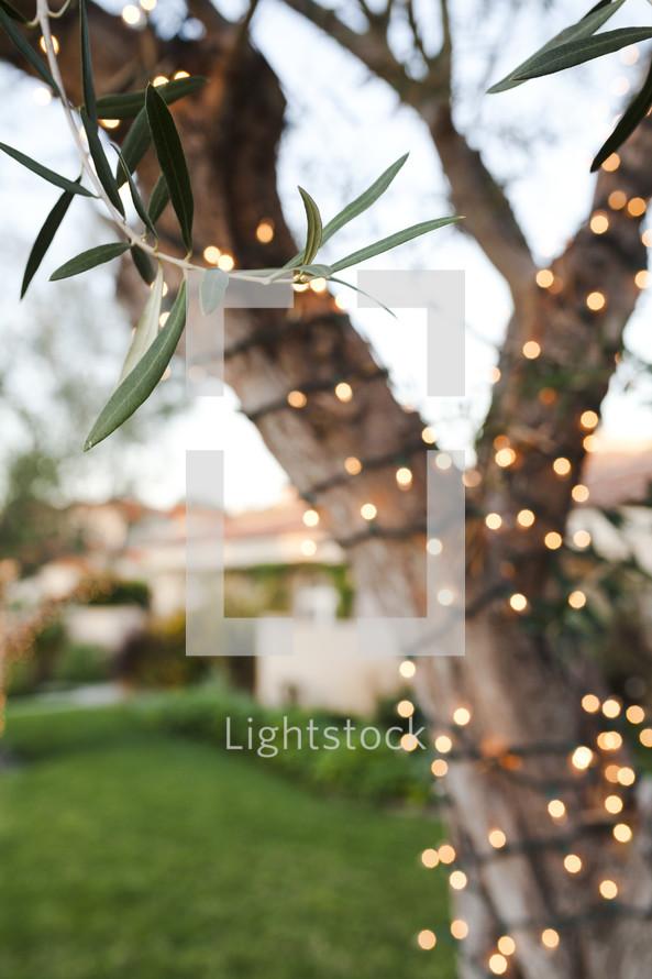 lights around a tree