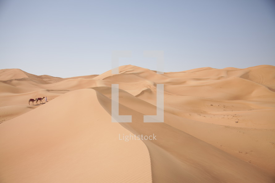 sand dunes and camels in a desert