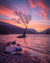 tree on in a lake under a pink sky at sunset