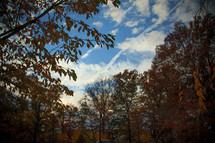 fall trees under a blue sky