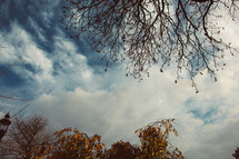fall tree branches and clouds in the sky