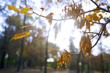 fall leaves on a branch in warm sunlight