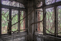 vines on windows in an abandoned building