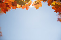 border of fall leaves and blue sky