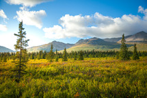 Alaskan mountain range landscape with clouds and trees