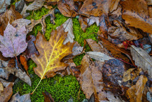 brown wet leaves on moss