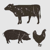 cow, pig, chicken, illustration