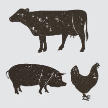 cow, pig, chicken, illustration