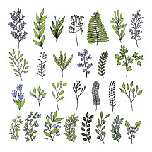 plant sprigs