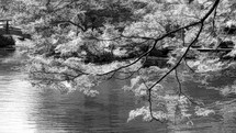tree branches hanging over lake water