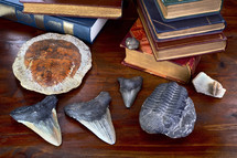 shark's teeth, fossils, and books on a desk