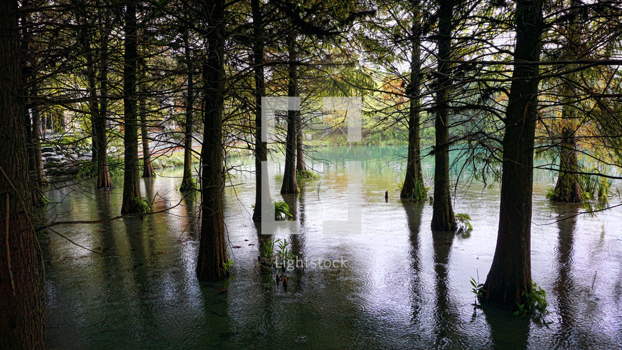trees in water in a swamp
