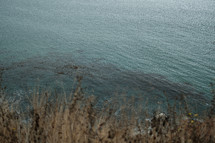 brown grasses along a shore and cove