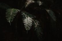 fronds in dark forest