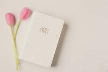pink tulips and the Holy Bible on a white background