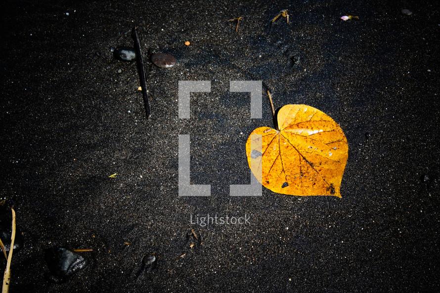 yellow leaf on black Bali sands