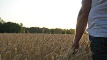man walking through a field of golden wheat