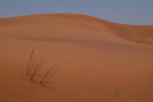 Sand dune and sprig of grass in the desert