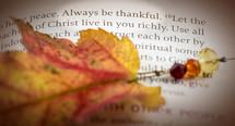 Always be Thankful, scripture