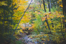 creek in a fall forest