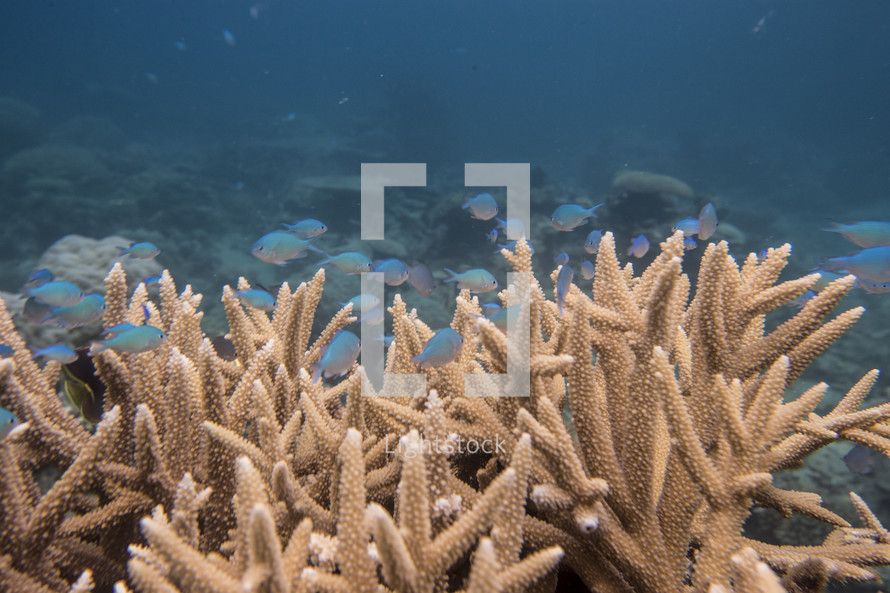 coral and a school of tropical fish