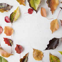 scattered fall leaves on white background