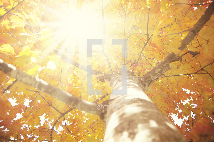 sunlight through the branches and fall leaves of a tree