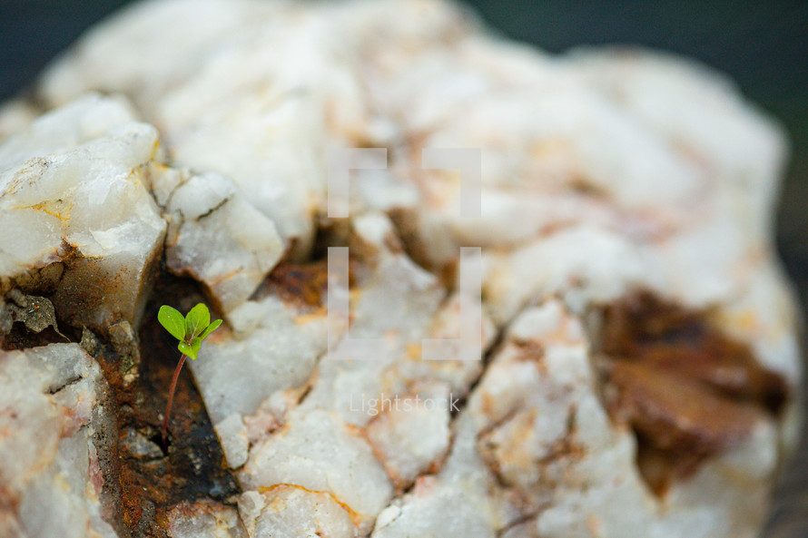 A seed found its way into a tiny hole in this rock and sprouted new life. Copy space on right of photo.