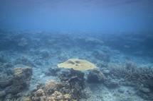 Nature & coral underwater in ocean of Fiji