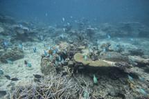 underwater school of fish