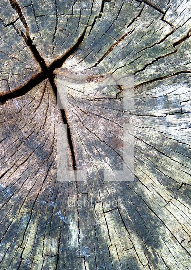 cross in a tree stump